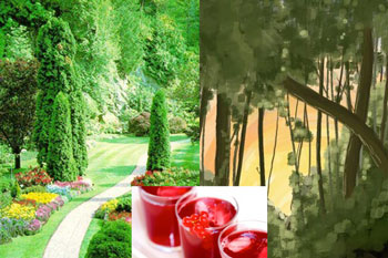 Cultured garden and wilderness with red berry juice