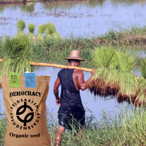 Field with bag of democracy seeds