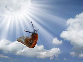 Slug on a heavenly cloud