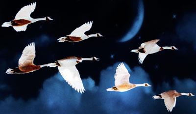 Geese flying through dark skies