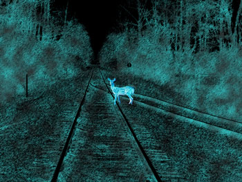 Train tracks at night with pale deer