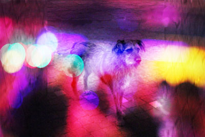 Stray dog superimposed on neon lights