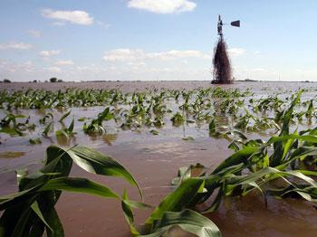 Field flooded by Iowa River