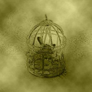 Bird in golden cage