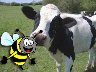Cow with cartoon bee