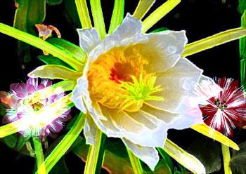 Flowers against dark background