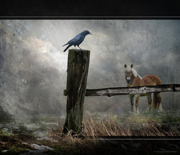 Crow on fence post and horse on misty field.