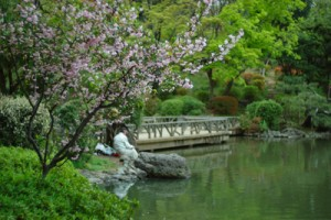Pond surrounded by green and cherry blossoms