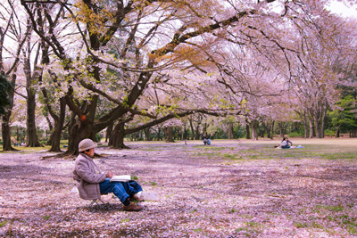 Woman painting cherry blossoms