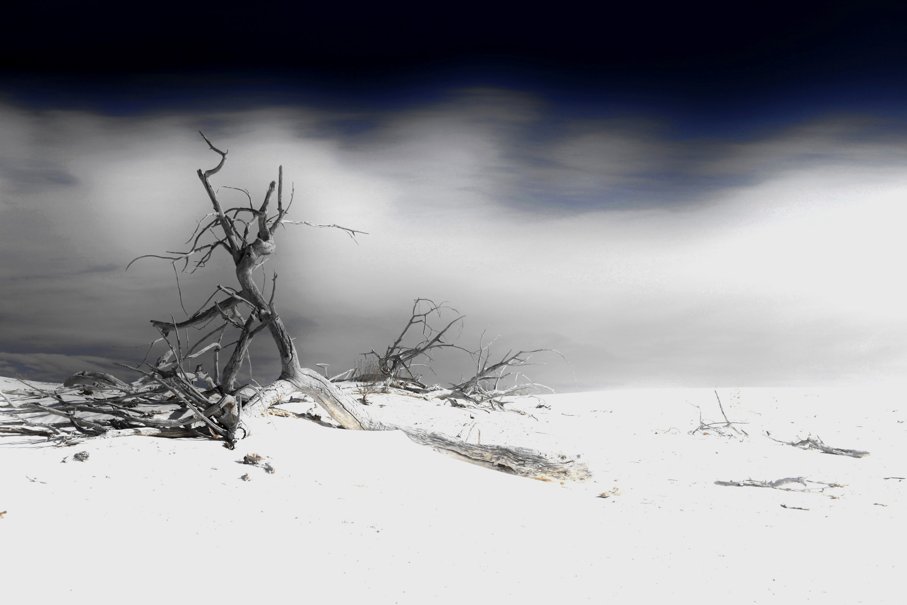 """Blue Loneliness"" by Fabrice Poussin (desert image with bare branches"