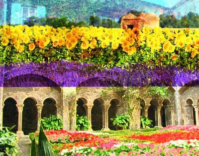 Sunflowers, lavender and St. Remy, France