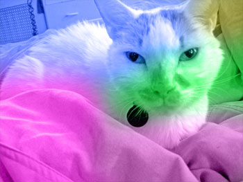 Our cat Luke with vivid colors