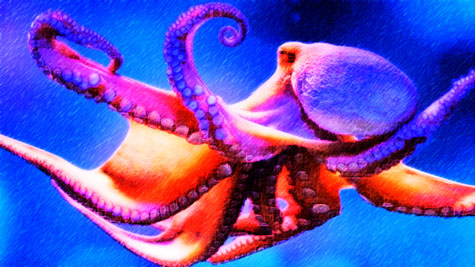 Brightly colored octopus
