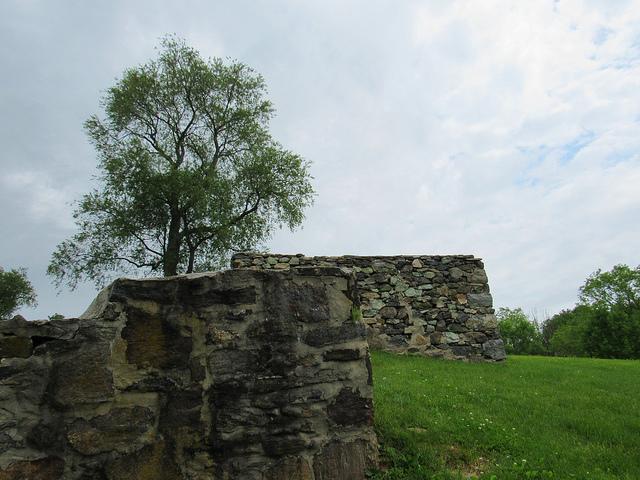 Single tree on ancient wallA