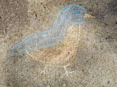 Robin drawn on a sidewalk in chalk