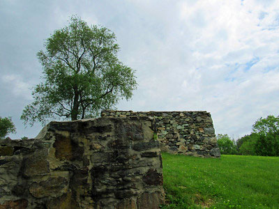 Tree and wall at Okehocking Preserve