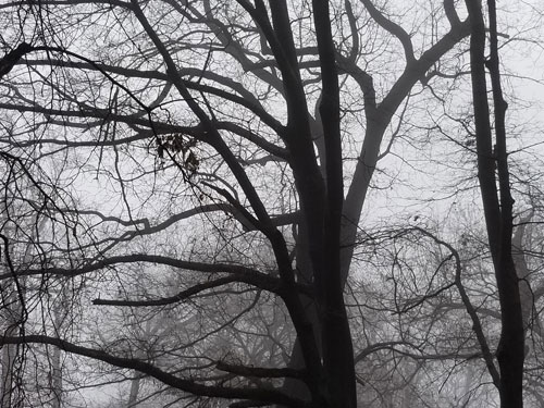 Bare trees in mist